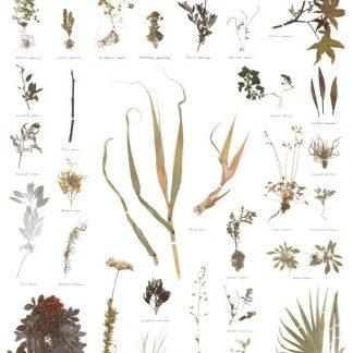 Sun + Soil Herbarium Poster